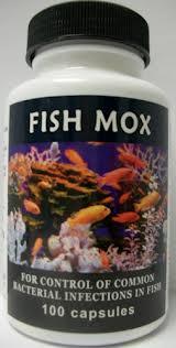 is fish amoxicillin safe for human consumption